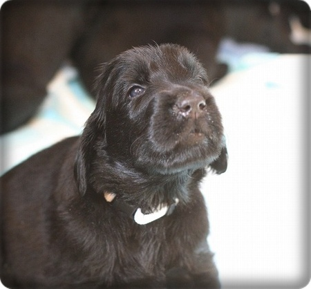 Img_110809puppies_37ps