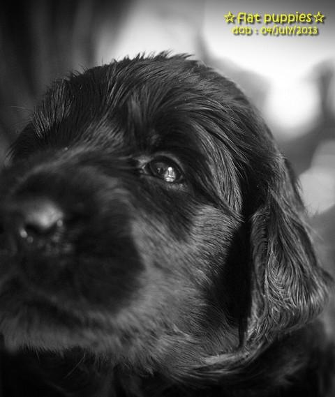 Simg_puppies